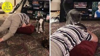 Cat Notices Special Needs Boy Having A Meltdown And Knows Exactly What To Do
