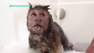 ? Funniest Animals ? - Try Not To Laugh ?Funny Domestic And Wild Animals' Life -