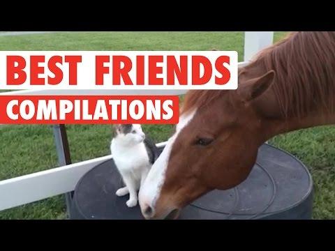Cute BFF Pet Video Compilation 2016 - UCPIvT-zcQl2H0vabdXJGcpg