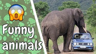 What would you do if you saw this... Film it! Crazy people meet animals