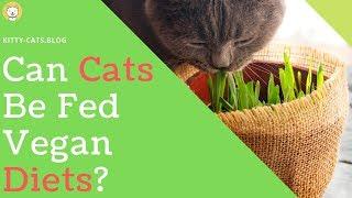 Vegan Cat Diet - Cat Vegan Diet Weight Loss