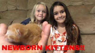 Cute girls playing with newborn kittens