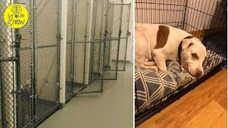 Last Puppy At Shelter Finally Smiles When He Finds A Home