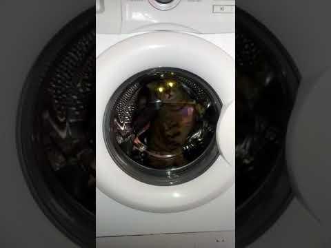 Cat in machine