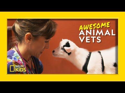 So You Want To Be a Vet? | Awesome Animal Vets - UCXVCgDuD_QCkI7gTKU7-tpg