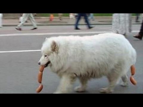 IMPOSSIBLE NOT TO LAUGH - The funniest DOG & PUPPY videos! - UCR2KG2dK1tAkwZZjm7rAiSg