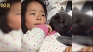 Crazy Animals Video Compilation - Funny & Cute #223