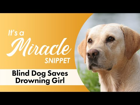 Blind Dog Saves Drowning Girl - It's A Miracle - 6033 - UCi_iKv5NXxFbplYn6KXiXRw