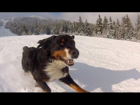 GoPro: Powder Hound - UCqhnX4jA0A5paNd1v-zEysw