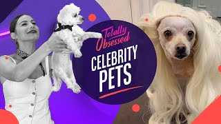 "Totally Obsessed: baguette Vergara, los perros de Lady Gaga y otros ""celebrity pets"" 